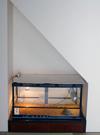和室(床の間・階段下収納)